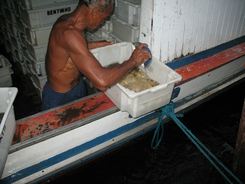 Right on the water change, arriving at the port of Manaus before being transported to the gatherer for quarantine.
