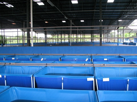 Another view of these pools filled canvas Cardinals. Note that they are protected indoors avoiding sudden changes in temperature and PH (sun and rain)