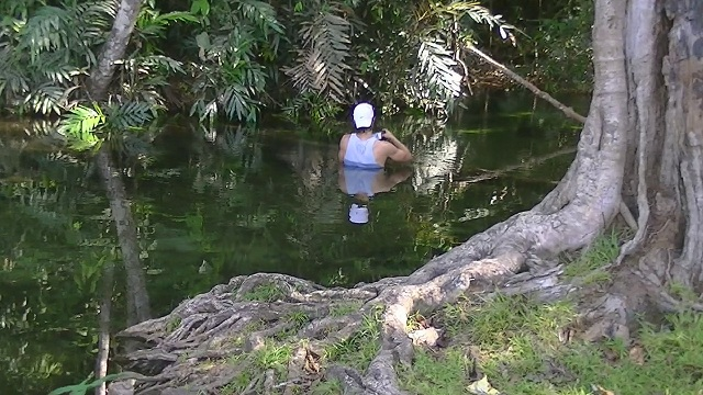 Morichal in Venezuela Orinoco clear water (Venezuela): pH 4.35; Water temperature at noon 26,1C °; Conductivity 6us; Entirely clear water. Here I could shoot from several other fish.