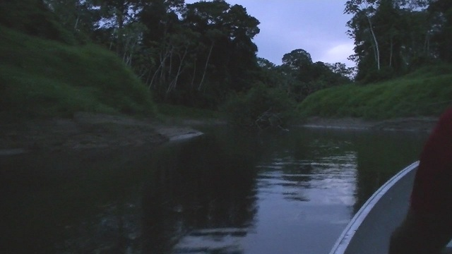 """Caño """"ANAP"""" a small tributary of the Orinoco (Colombia): 3.70 PH black water. 5us conductivity."""