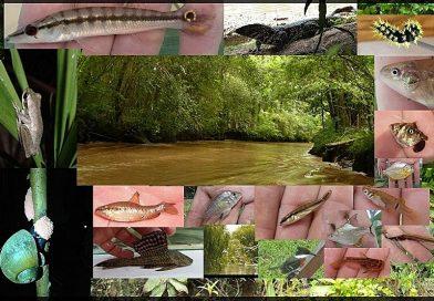 Biodiversity of the Rio Paraná Delta, Argentina