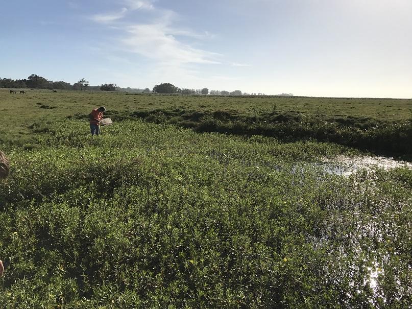 Hermoso biotopo, mantenido por alguna lluvia reciente, solo C. melanotaenia pudimos pescar en cuanto a killis se refiere.