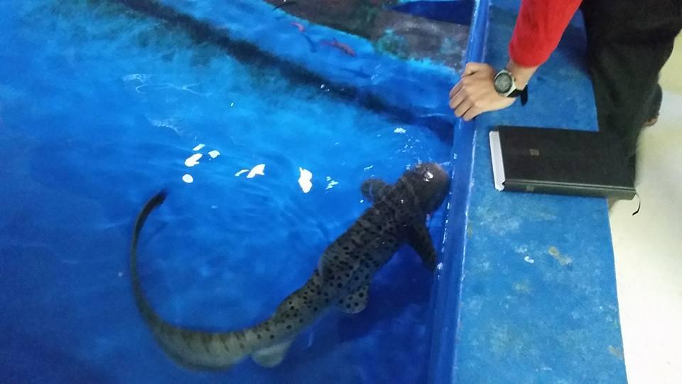 national aquarium malta