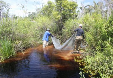 Biotopes of Brunei | Life in the Blackwaters of the Badas Peat Swamp