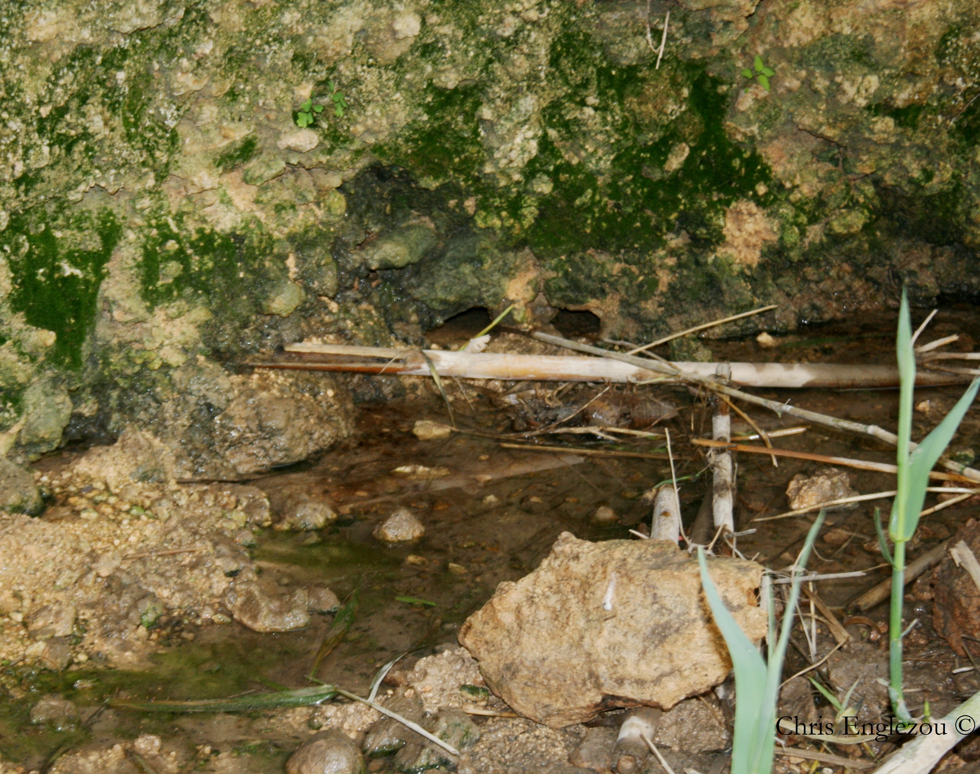 freshwater crab habitat malta