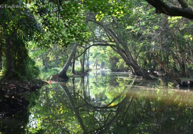 Exploring aquatic biotopes in the Western Ghats | Mountain Streams to Mangrove Swamps