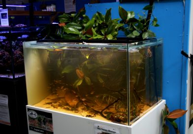 Rio Nanay biotope workshop at Maidenhead Aquatics in Melksham