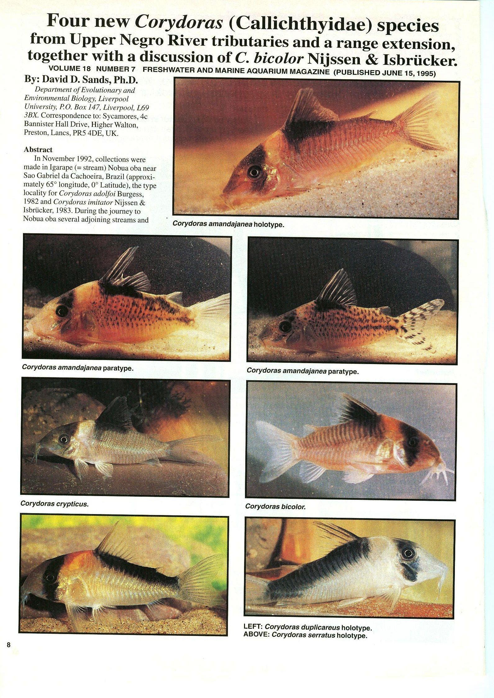 Corydoras Species   Corydoras Catfish Pigment Patterns Behaviour Crypsis And