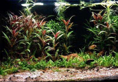 Biotope Aquarium 101: An authentic Rio Meta biotope for Ram Cichlids & more!