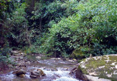 Biotopes of the Madre de Dios drainage, Peru.