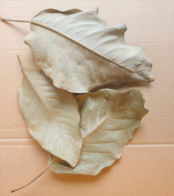 magnolia-leaves-biotope-botanicals-blackwater-aquarium-decor