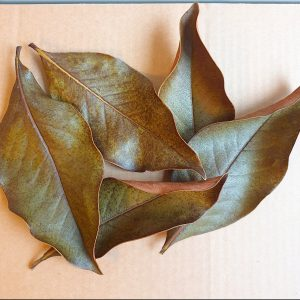 magnolia-leaves-biotope-botanicals