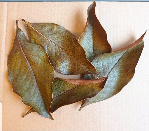magnolia-leaves-biotope-botanicals
